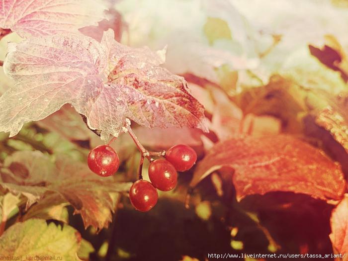 berries_by_izaballaantern-d6u0fj0 (700x525, 266Kb)