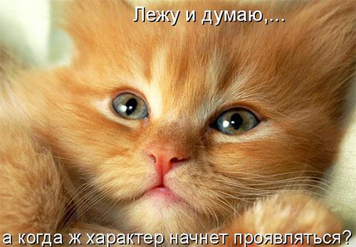 1391277157_1 (500x347, 48Kb)