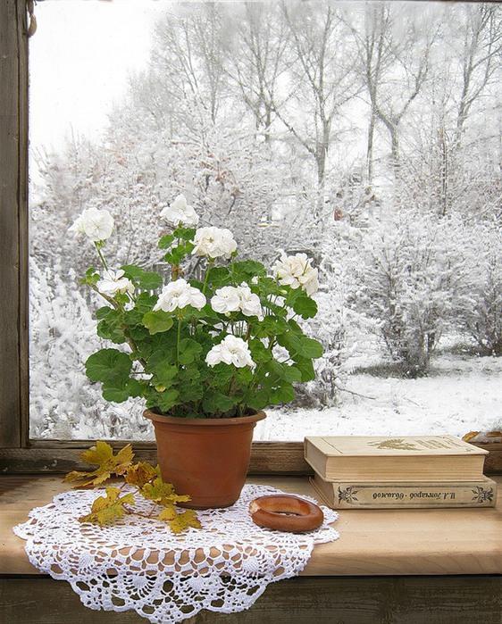зимний натюрморт 15 (562x699, 467Kb)