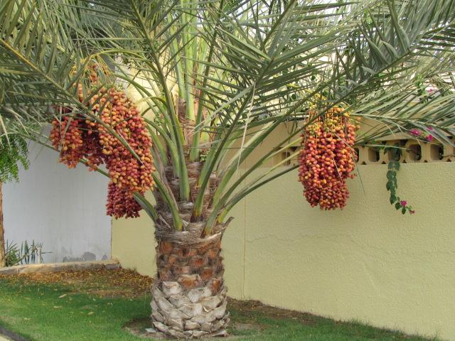 пальма 4 (640x480, 417Kb)