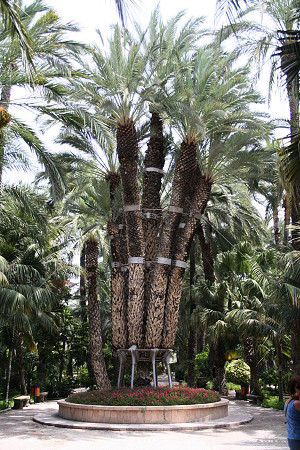 пальма 18 (300x450, 222Kb)