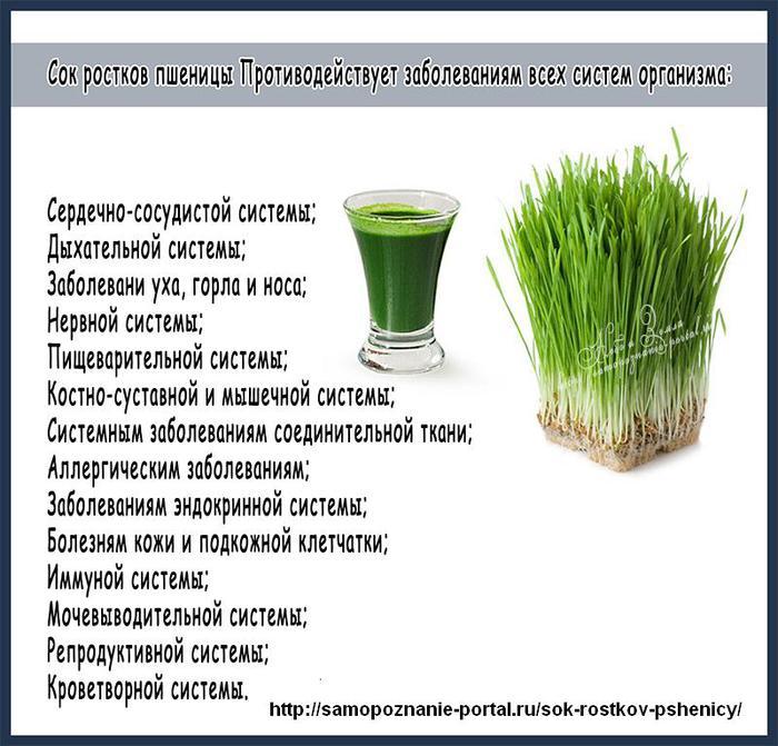 polza-soka-rostkov-pshenicy (700x671, 77Kb)