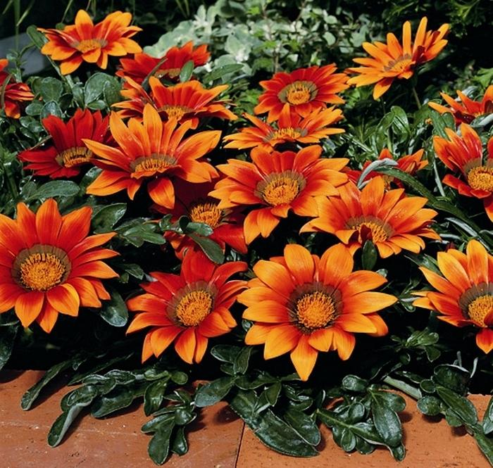 Гацания фото цветов