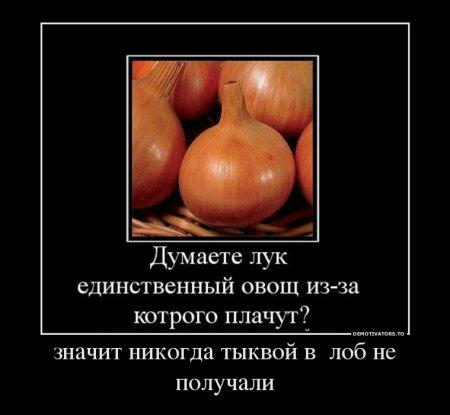 лук (450x415, 26Kb)