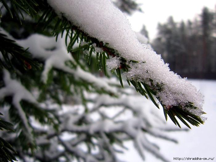 Рощино, зима (1) (700x525, 212Kb)