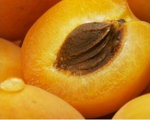 lecenie-abrikosom (300x240, 11Kb)