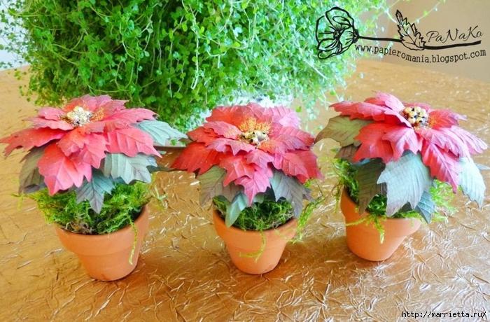 Пуансеттия в горшочке. Цветы из бумаги (3) (700x460, 330Kb)