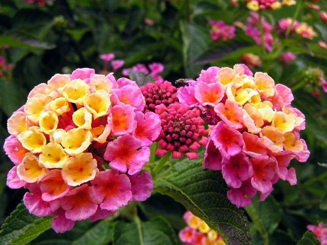 4017627_flores_primavera2010_f_010 (666x500, 63Kb)