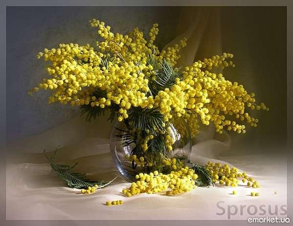 5053532_mimozi (599x461, 127Kb)