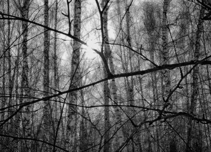 Новости из леса/1415502_les (700x505, 182Kb)