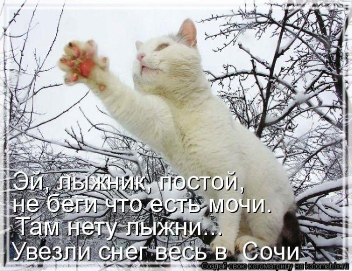 1391956634_cm_20140207_03612_022 (700x540, 270Kb)
