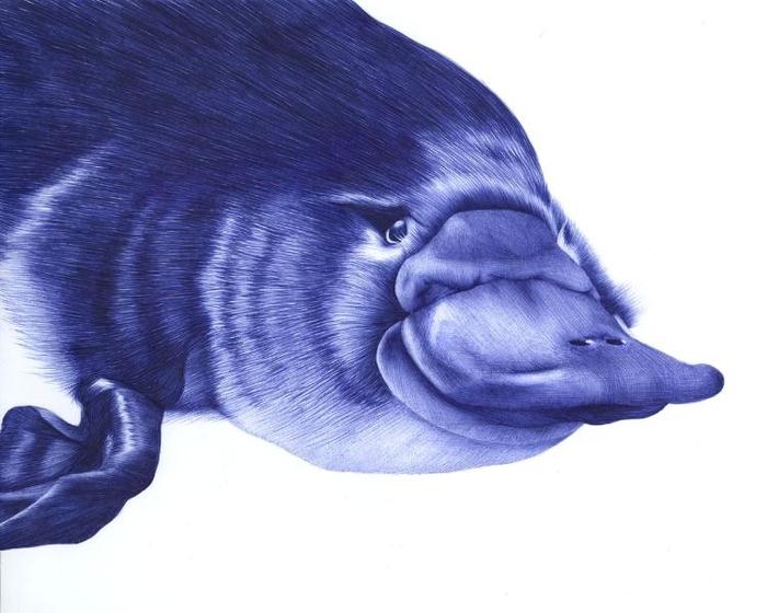 рисунки шариковой ручкой Художница Сара Эстридж 5 (700x560, 195Kb)