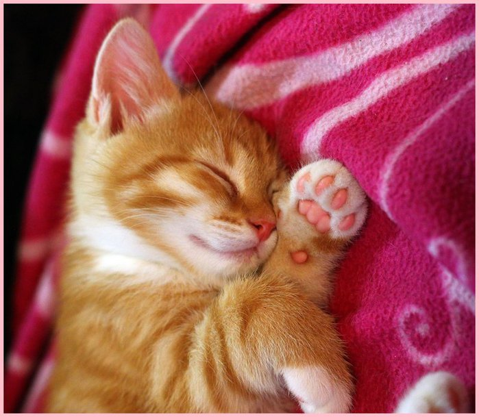 pink_baby_dreams_by_meow_pics-d6jotwp (700x609, 83Kb)