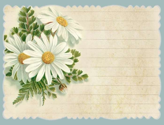 Daisies blue border ~ journal card ~ lilac-n-lavender (700x534, 228Kb)
