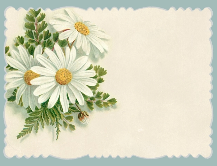 Daisies blue border blank ~ journal card ~ lilac-n-lavender (700x534, 193Kb)