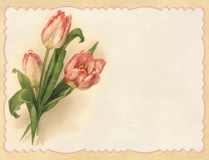 Pink tulips ~ peach border blank notecard ~ lilac-n-lavender (700x535, 209Kb)