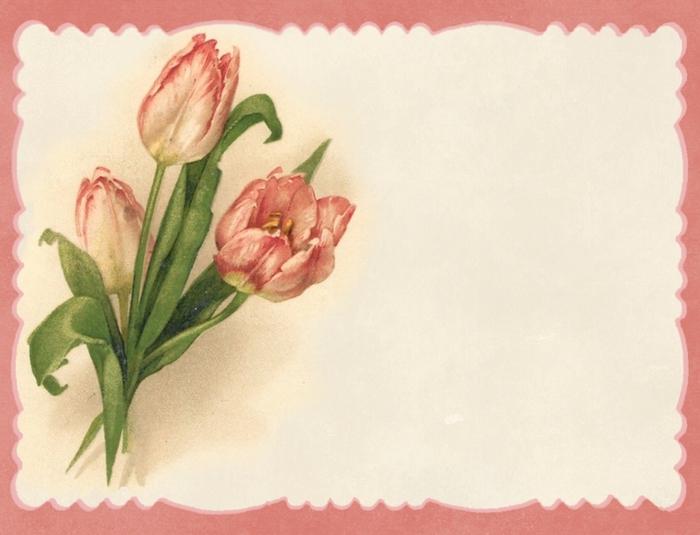 Pink tulips ~ pink border notecard ~ lilac-n-lavender (700x535, 207Kb)