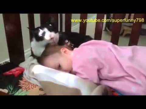 кошки дети