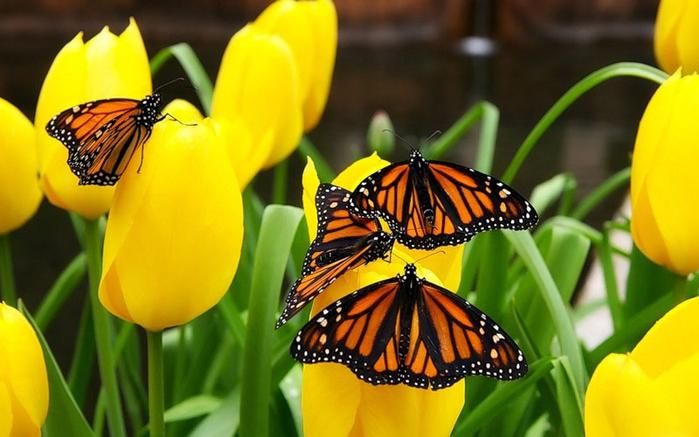 бабочки , цветок 3 (700x437, 330Kb)