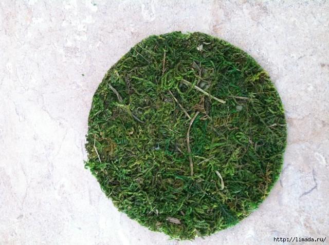 Moss-Circle-640x478 (640x478, 240Kb)