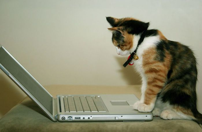 Cat_Using_The_Computer (700x458, 33Kb)