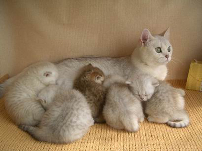 3_Cora_Dominika_Peppercats-6__h1000 (700x525, 76Kb)