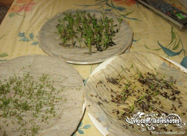 nadjibok56naljibok прорастить семена