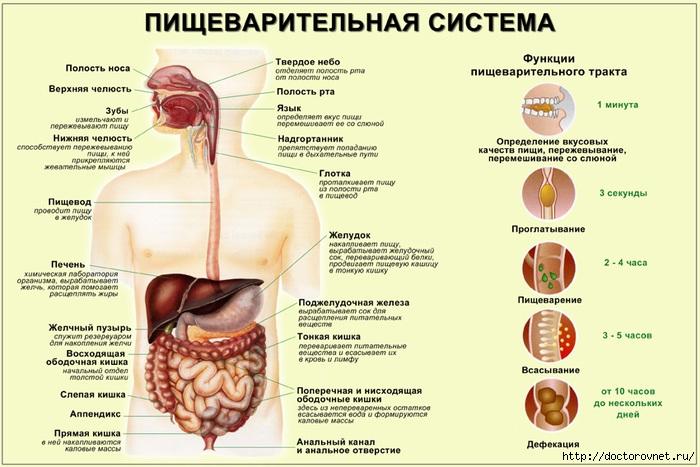 1392130764_pischevaritel_naya_sistema (700x467, 206Kb)