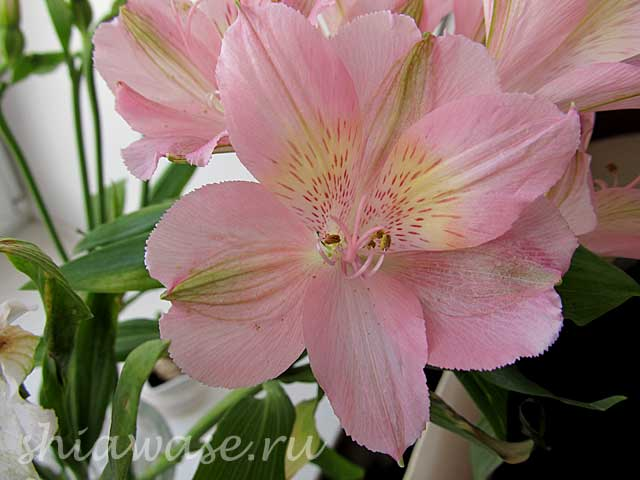 цветы-для-новых-друзей (640x480, 32Kb)