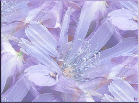 Сиреневая-нежность (450x335, 278Kb)