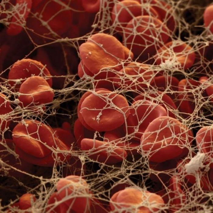 организм человека под микроскопом фото 1 (700x700, 272Kb)