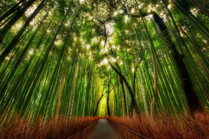 Бамбуковый Лес Сагано, Арасияма, Япония (700x467, 490Kb)