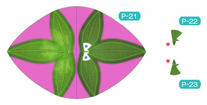 Пахира (Pachira) из бумаги. Цветные шаблоны для распечатки (4) (700x357, 143Kb)