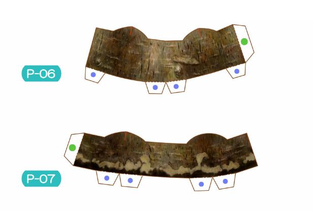 Пахира (Pachira) из бумаги. Цветные шаблоны для распечатки (7) (616x423, 174Kb)