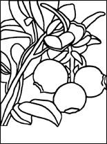 cranberry-s (155x208, 12Kb)