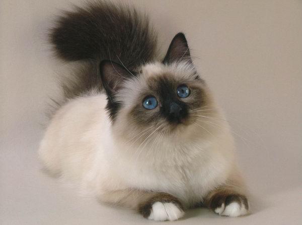 cats_07 (600x446, 103Kb)