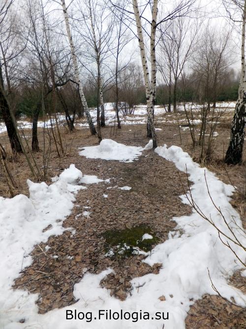 Остатки снега в лесу/3241858_bor8 (500x667, 250Kb)