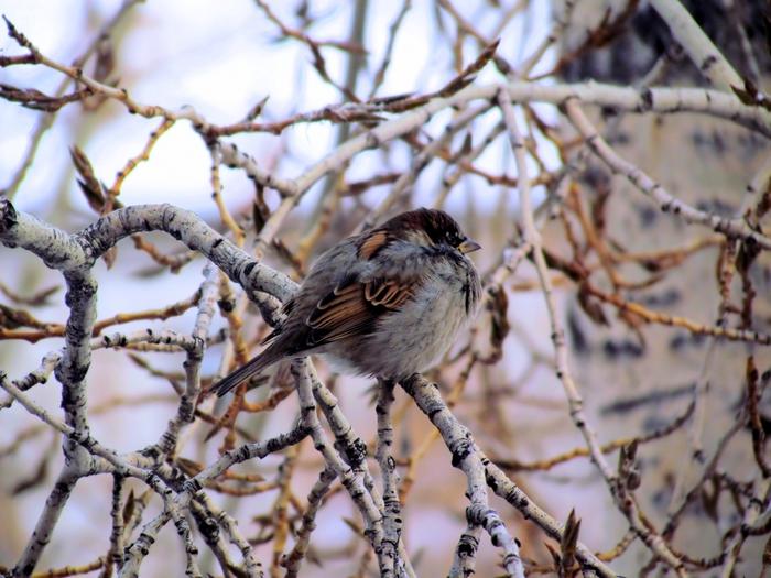 вид из окна, фото новосибирска, фото из окна, зимние фото, зимние пейзажи, городской пейзаж/4203019_IMG_7267 (700x525, 285Kb)