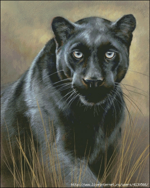 чёрная пантера - Самое