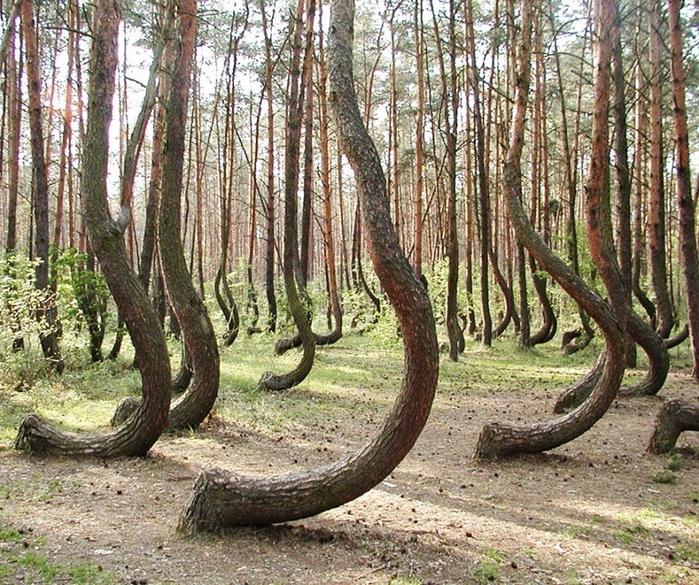 танцующий лес калининград фото
