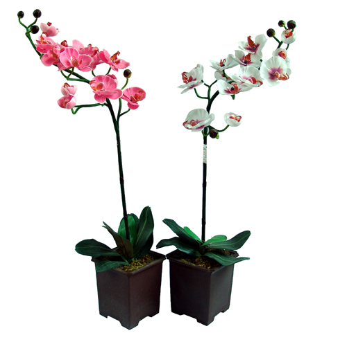 kupit_orhideju_s_dostavkoj (500x494, 114Kb)