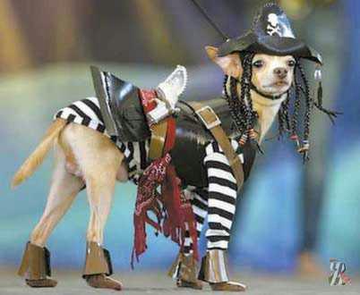 chien_(1) (402x330, 121Kb)