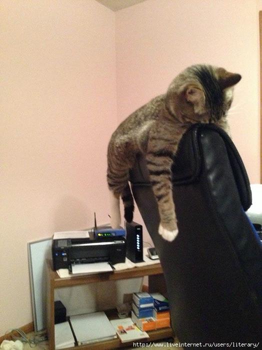 cats (1) (524x700, 255Kb)