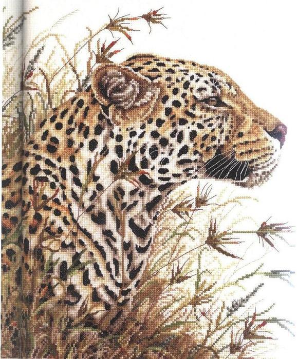 567800-01065 Leopard Safari_pic (578x700, 110Kb)