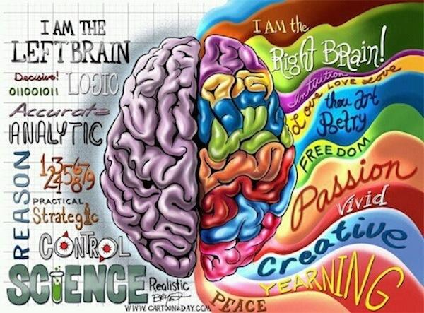 109905221_680153_brain_2 (600x443, 344Kb)