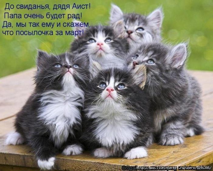 1301613307_kotomatrix_19-1 (700x560, 199Kb)