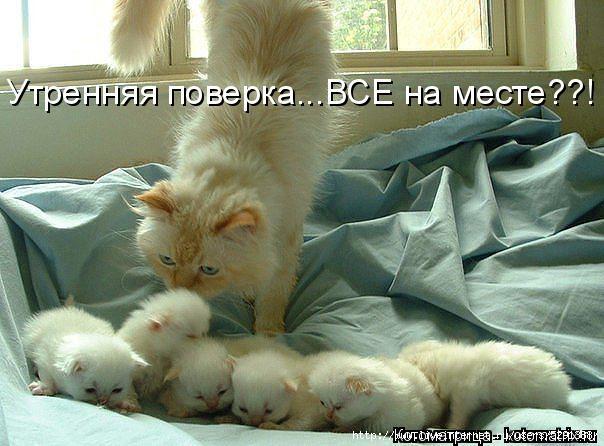 kotomatritsa_FR (604x446, 164Kb)