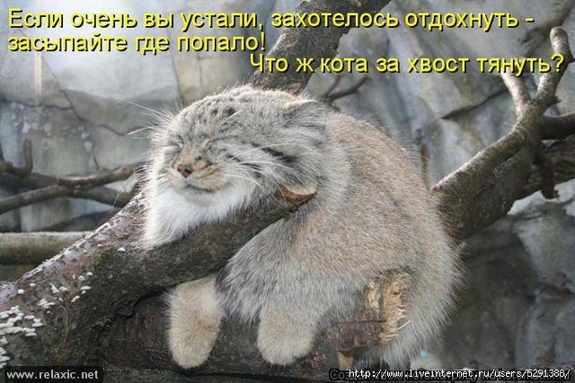 kotomatrix_082 (640x427, 176Kb)