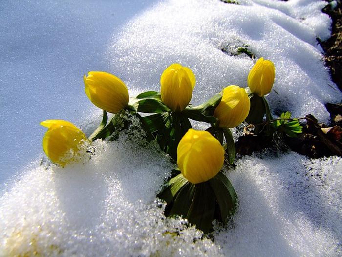 белый день хороши весной у нас в саду цветочки минус