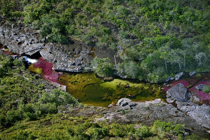 река пяти цветов колумбия фото 1 (700x466, 526Kb)